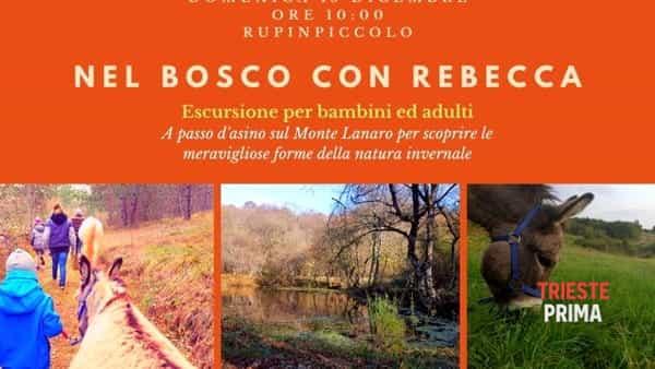 """""""Nel bosco con Rebecca"""", escursione naturalistica """"a passo d'asino"""""""