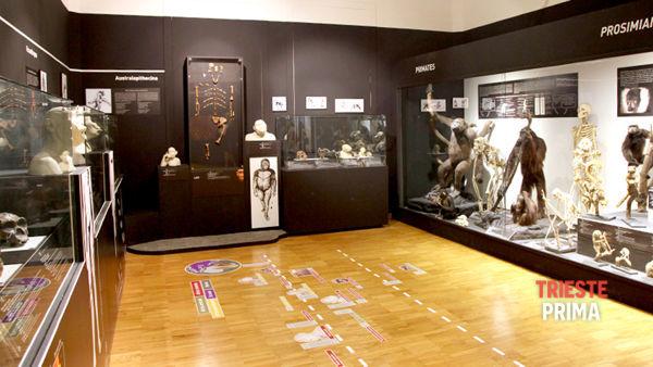 """Al Museo di Storia Naturale si parla di """"Acqua e carso: uno strano binomio"""""""