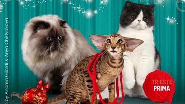 """Trieste Cat Show"": esposizione felina al Montedoro"