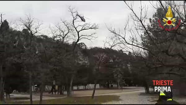 Ricerche della friulana scomparsa, l'elicottero della Protezione Civile in volo sul Rilke (VIDEO)