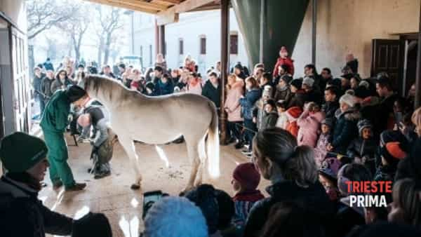 A Lipica Santo Stefano con la benedizione dei cavalli e della motocicletta