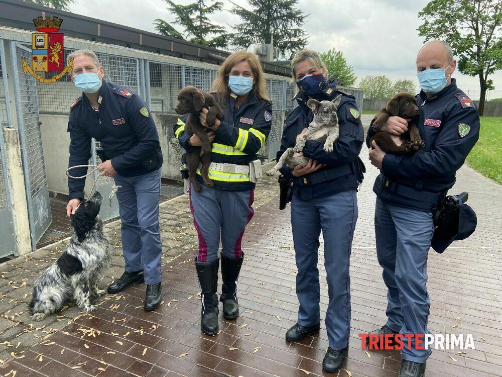 """Trasportava 36 cani in condizioni precarie: """"beccato"""" al confine e denunciato"""