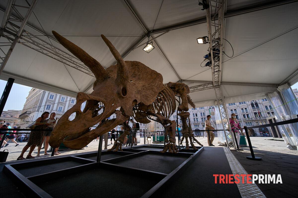 Il giorno di Big John è arrivato, in piazza Unità il più grande triceratopo al mondo