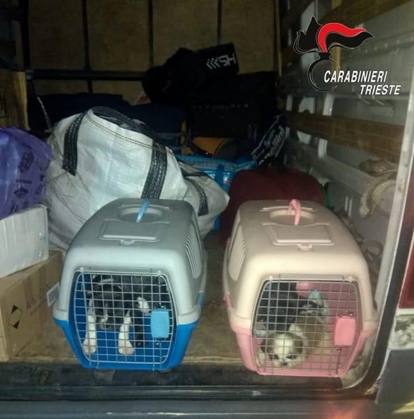 Cuccioli nel furgone-2